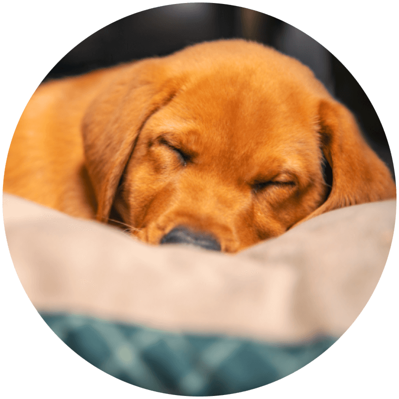 delarkin custom mattresses - pet beds